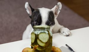 dog looking at a pickle jar and wanting to eat some pickles