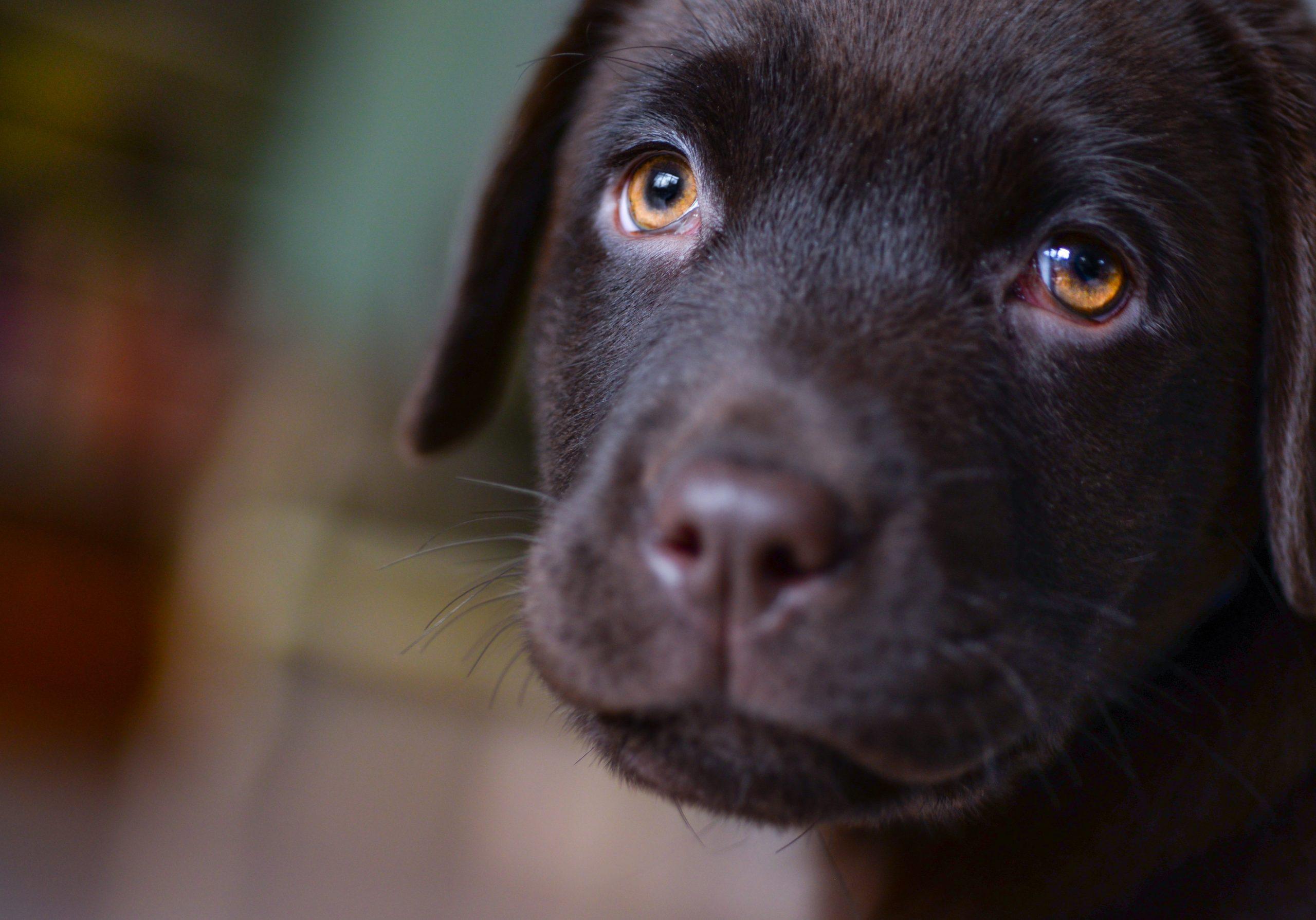 sick looking puppy
